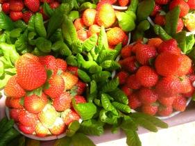 mahabaleshwar-strawberry.jpg