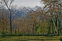 palampur-kangra-valley-tea-plantatiom.jpg