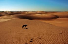jaisalmer-sam-dunes-sand.jpg