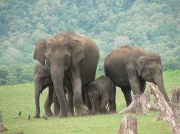 kabini-elephant.jpg