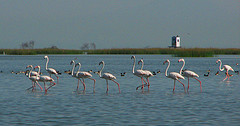 chilika-lake-birds.jpg