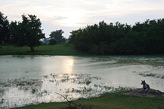 chilika-lake.jpg